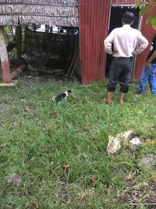 A puppy :)